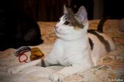 В дар очень красивые котята!